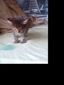 Кошки - Отдаю котят 2 месяца девочки в добрые рукиь, 0