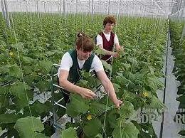 Разнорабочий - Требуются: Овощеводы в агрохолдинг, 0