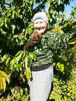 Рассада, саженцы, кустарники, деревья - Продаю саженцы клубники, малины, ежевики,…, 0