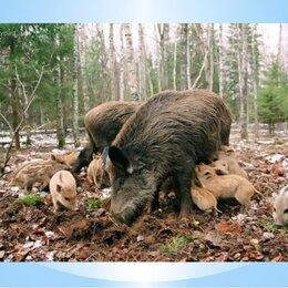 Прочие товары для животных - На корм диким животным, 0