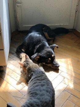 Собаки - Спасённый, пёсик Лакки, в поисках дома!, 0