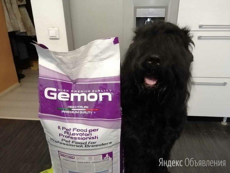 Итальянский премиальный корм для собак Gemon 20 кг по цене 4200₽ - Корма , фото 0