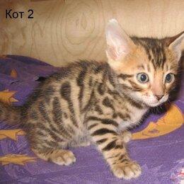 Кошки - Бенгалята, 0