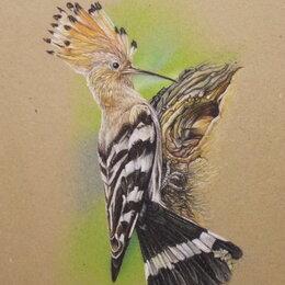 Картины, постеры, гобелены, панно - Удод у гнезда. Птица,картина,пастель,рисунок, 0