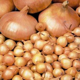 Лук-севок, семенной картофель, чеснок - Лук-севок Штуттгартер ризен, 0