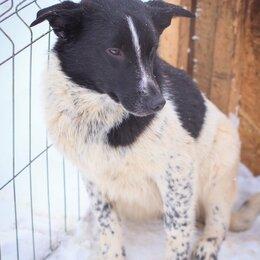 Собаки - Веселый щенок РОгалик ищет дом!!!, 0