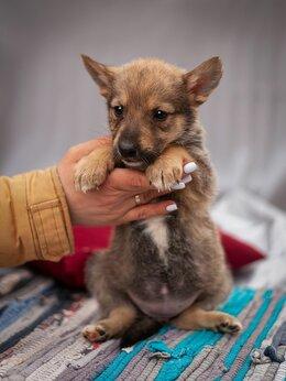 Собаки - Дуня-Одуванчик ждёт свою семью!, 0