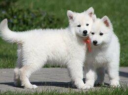 Собаки - Щенки Белой Швейцарской Овчарки., 0