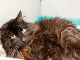 Кошки - Пушистый и отзывчивый кот Валенок, 0