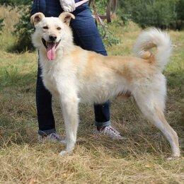 Собаки - Весёлый блондин Винни ищет дом, 0
