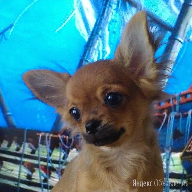 Океан желаний. по цене 10₽ - Собаки, фото 0