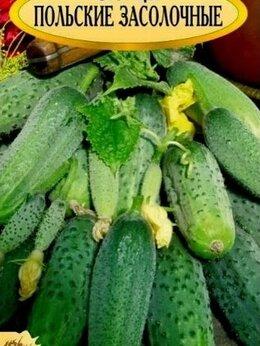 Семена - Семена. Огурцы засолочные, пчелоопыляемые.…, 0