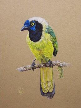 Картины, постеры, гобелены, панно - Зеленая сойка. Сухая пастель. Птица,картина, 0