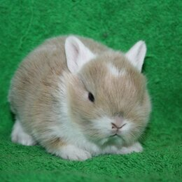 """Кролики - Питомник кроликов """"Тихон"""", 0"""