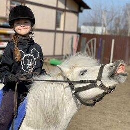 Конный спорт - Уроки верховой ездой в Бронницах, 0