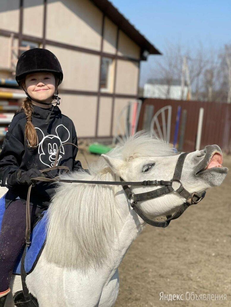 Уроки верховой ездой в Бронницах по цене 1500₽ - Конный спорт, фото 0