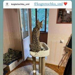 """Когтеточки и комплексы  - Когтеточка для кошек """"Трон императора"""", 0"""