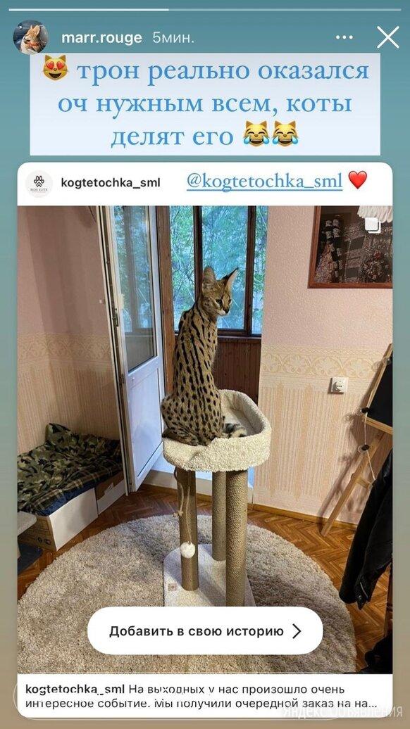 """Когтеточка для кошек """"Трон императора"""" по цене 2800₽ - Когтеточки и комплексы , фото 0"""