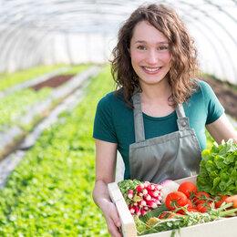 Рабочие - Сборщики овощей, 0