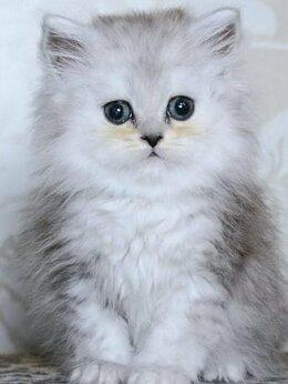 Кошки - Пушистый малыш ищет новое жилье, 0