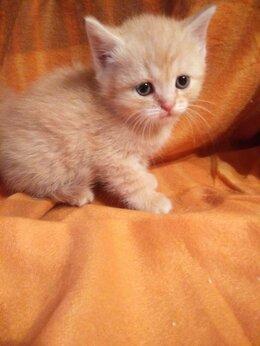 Кошки - Отдам котенка в добрые руки , 0