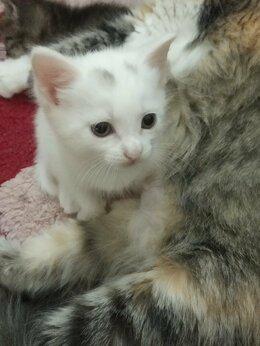 Кошки - Котята от домашней кошки в дар, 0