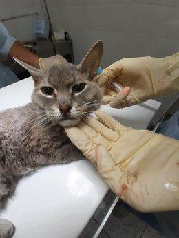 Животные - На Химмаше найден кот, 0