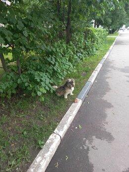 Животные - Нашлась собака, 0