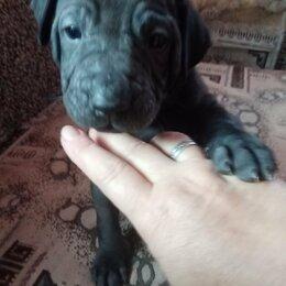 Собаки - Щенки тайского риджбека, 0