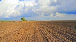 Сельское хозяйство -  Продаётся в Крыму действующее…, 0