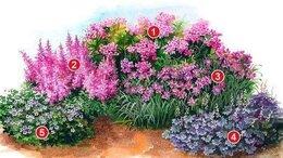 Рассада, саженцы, кустарники, деревья - Клумба N 10, готовое решение, многолетние цветы, 0