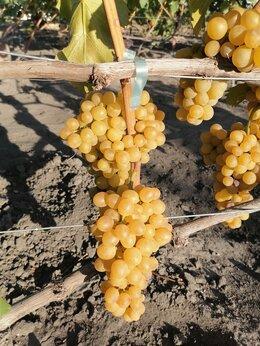 Рассада, саженцы, кустарники, деревья - Черенки винограда осень 2021, 0