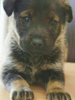 Собаки -  НЕвозможно НЕ влюбиться, милейший карапуз, …, 0