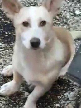 Собаки - Щенок в добрые руки.Девочка 4  месяца.., 0