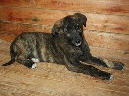 Собаки - Собака (щенок) в добрые руки. Малышка Фиона ждет…, 0
