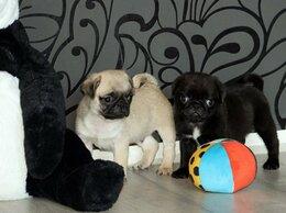 Собаки - Щеночки Мопса с документами, 0