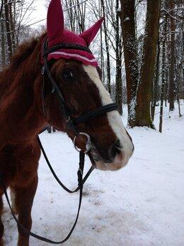 Услуги для животных - Работа с лошадьми , 0