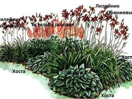 Рассада, саженцы, кустарники, деревья - Клумба из многолетних цветов N9, готовое решение, 0
