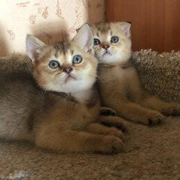 Кошки - Котята, 0