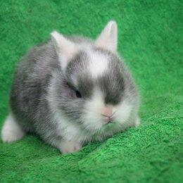 Кролики - Кролики домашние карликовые, 0