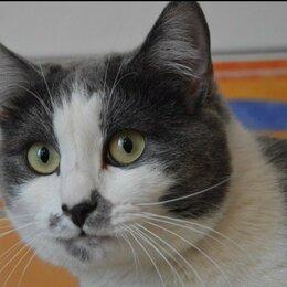 Кошки - Красавица Лилибет (3 года), 0