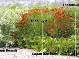Рассада, саженцы, кустарники, деревья - Клумба N 28, кустарники и многолетние цветы, 0