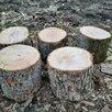Дрова  дуб по цене 2300₽ - Дрова, фото 10