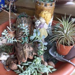 Комнатные растения - суккуленты, кактусы, 0