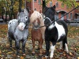 Туры - Экскурсия В гости к мини лошадям..., 0