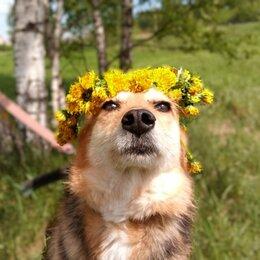 Собаки - Малышка в дар, 0