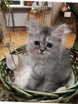 Кошки - Вискасы- котики и кошечки + подарок фмр, 0