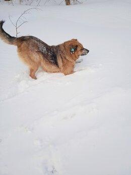 Собаки - ищем хозяев, 0