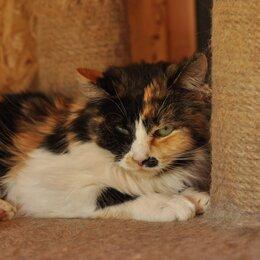 Кошки - Трехцветная кошка Анфиса, 0