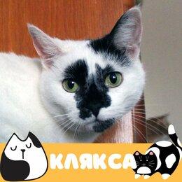 Кошки - Кошка Клякса, 0